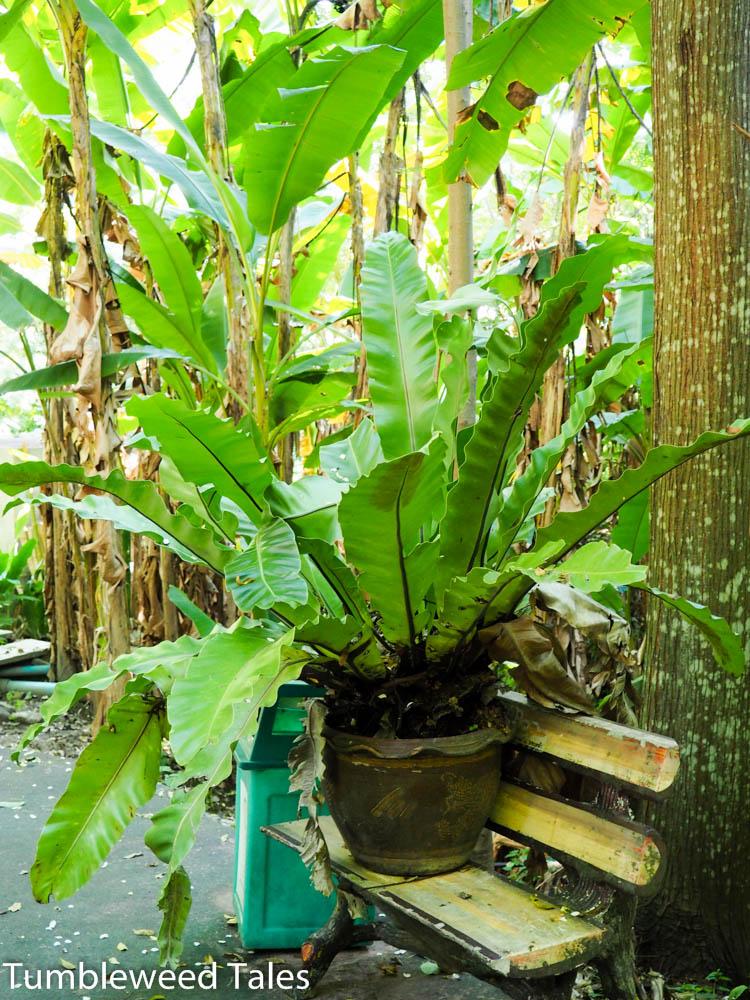 Überall in Thailand stehen Topfpflanzen rum!