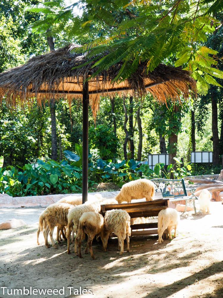 Schafe unter'm Sonnenschirm