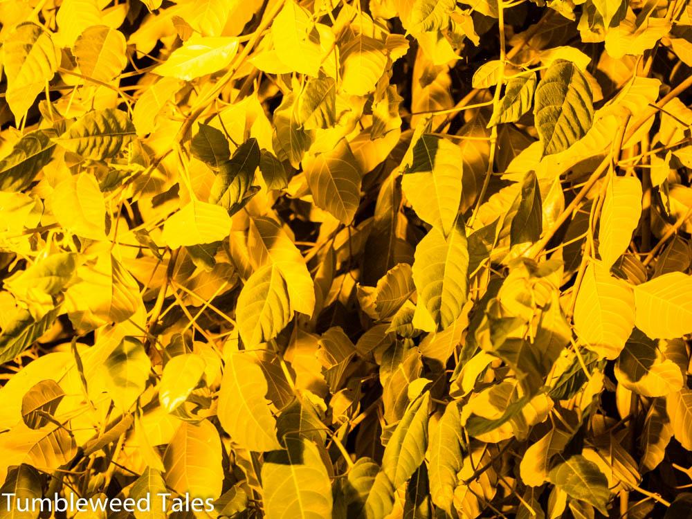 Blätter in der Bus Bar