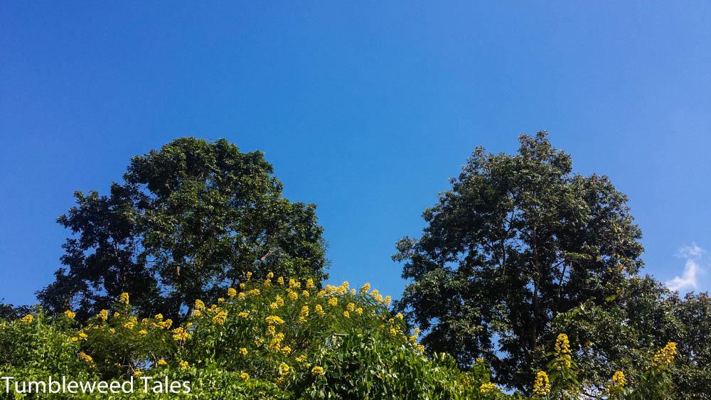 Tropenbäume am Straßenrand