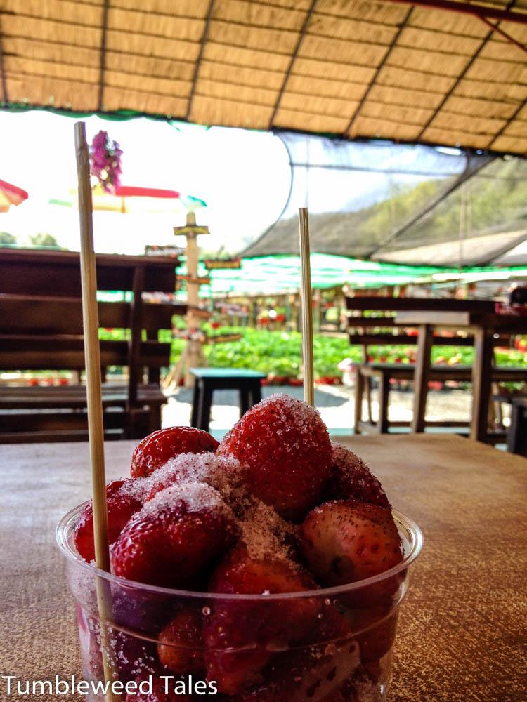 Überzuckerte Erdbeeren. Hui!