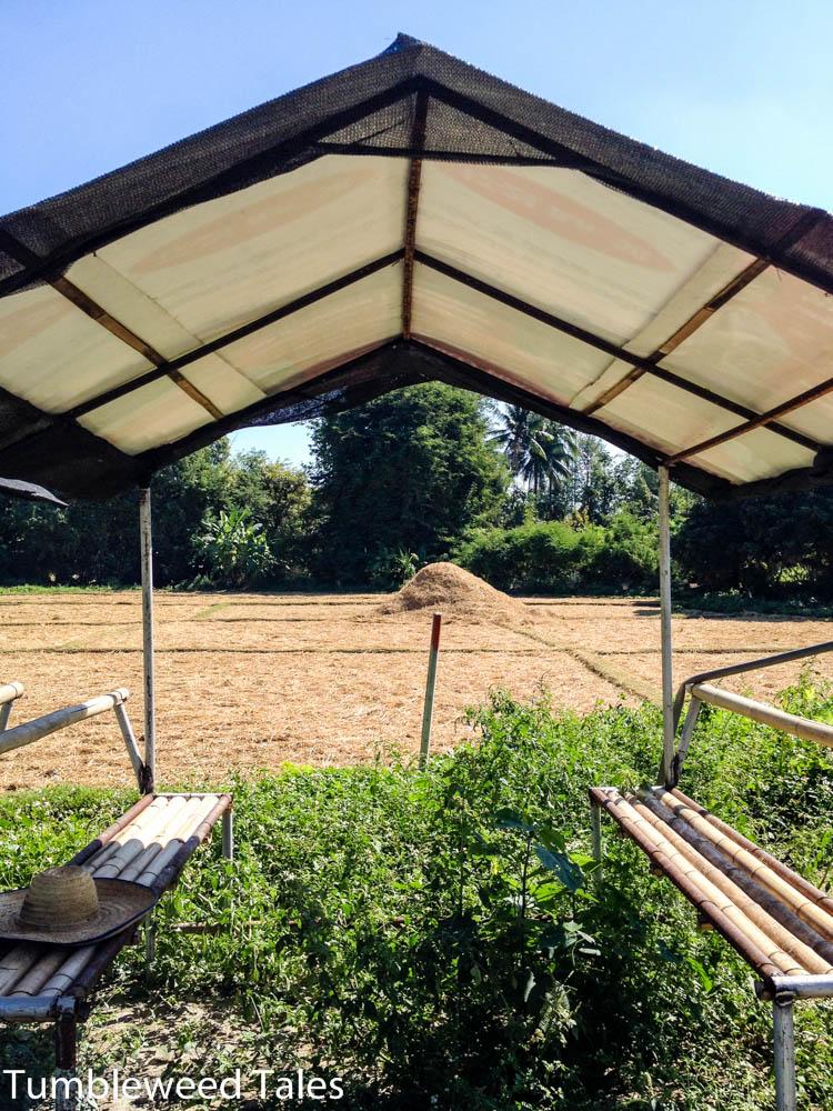 Eine ruhige Ecke auf der Erdbeerfarm
