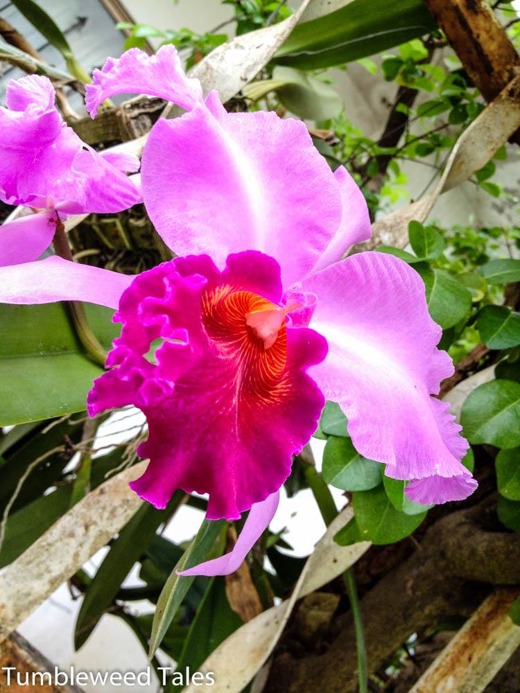 Blume im Nachbarsgarten