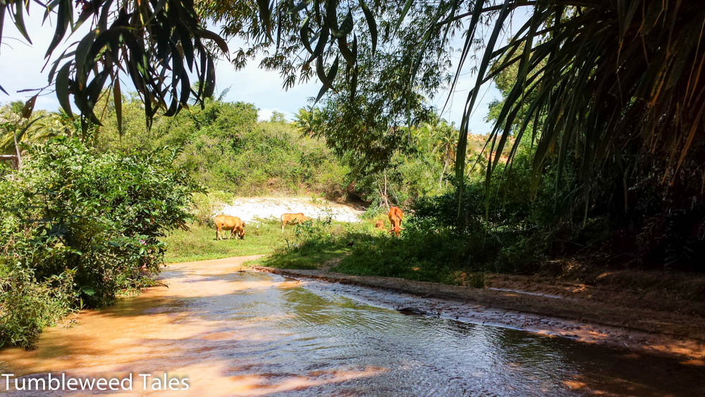 Kühe auf dem Fairy Stream... Dairy Stream?