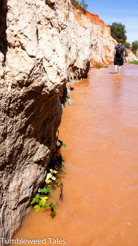 Ein Gewächs zwischen Stein und Wasser