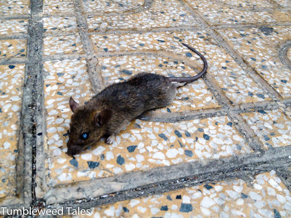 Tote Maus. Sorry, Leute!
