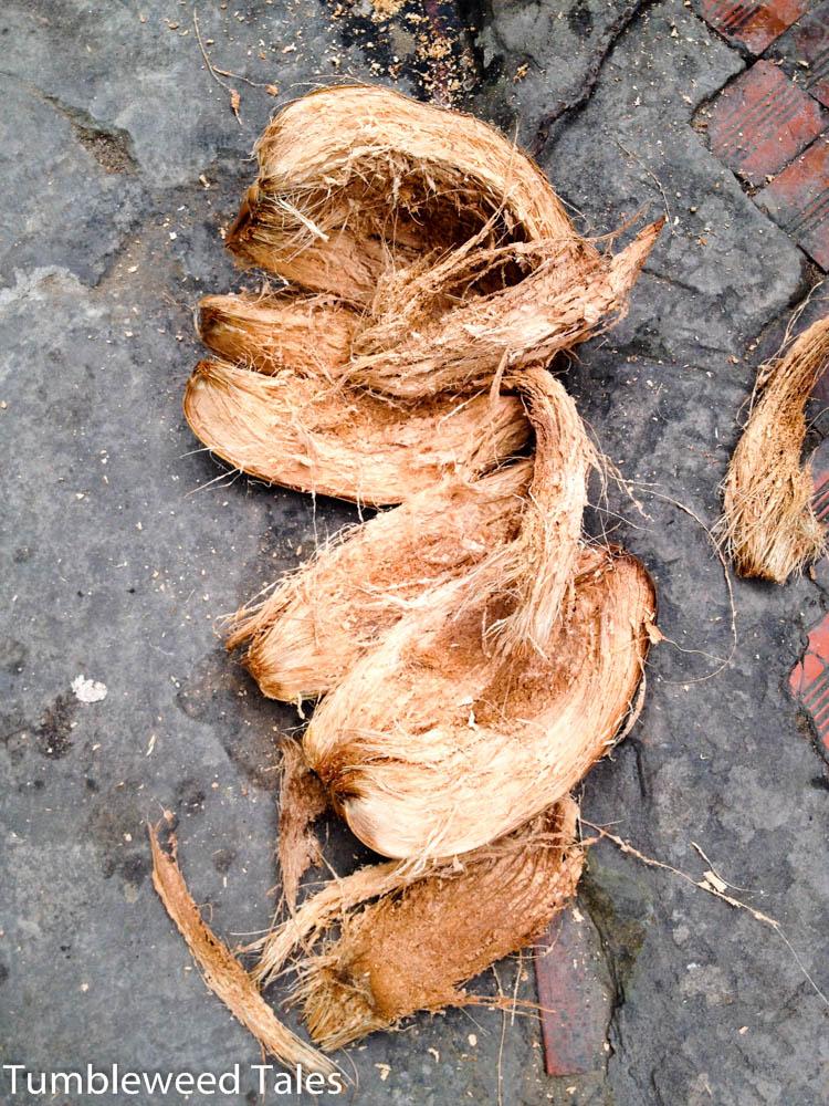 Kokosnuss-Reste