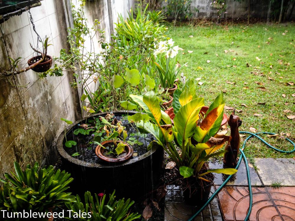 Unser Garten bei Regen. Die Regentage kann ich an einer Hand abzählen.