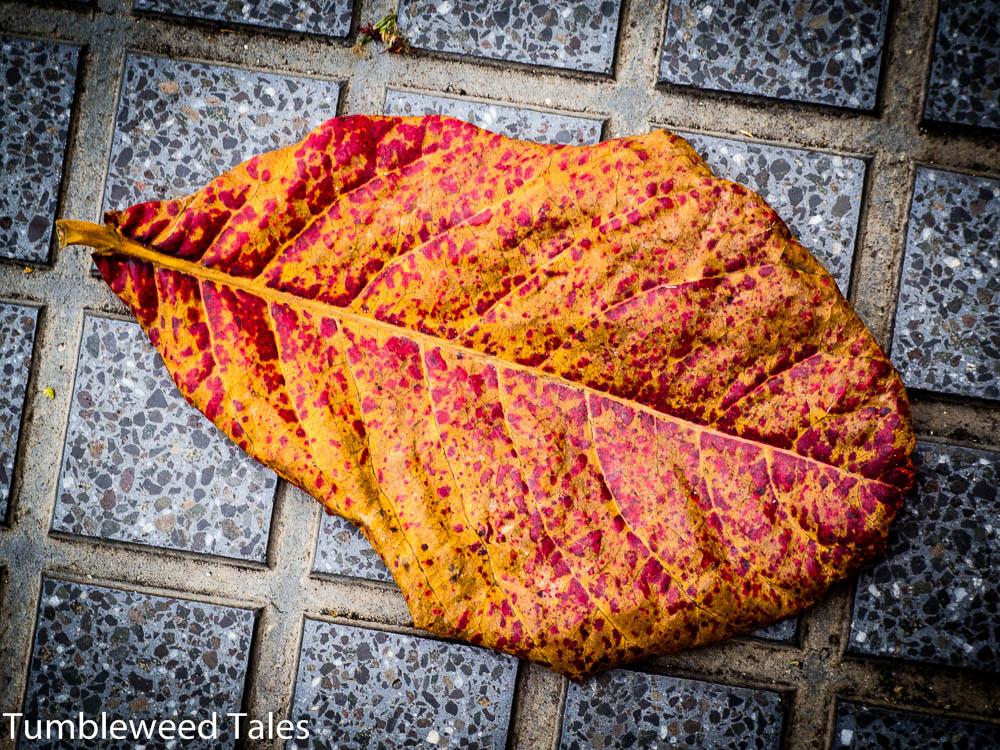 Ein imposantes Blatt in wilden Farben