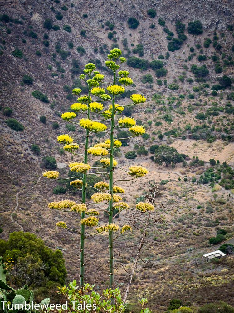 Blütenpracht in der Caldera