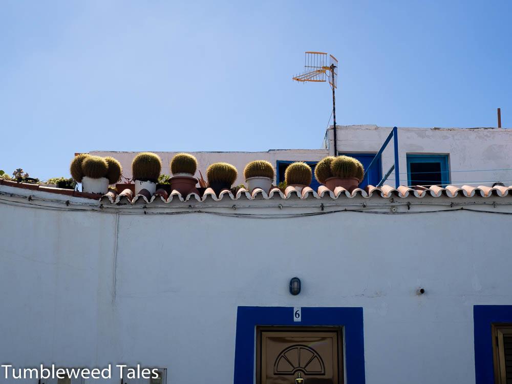 Kaktusgarten auf dem Dach