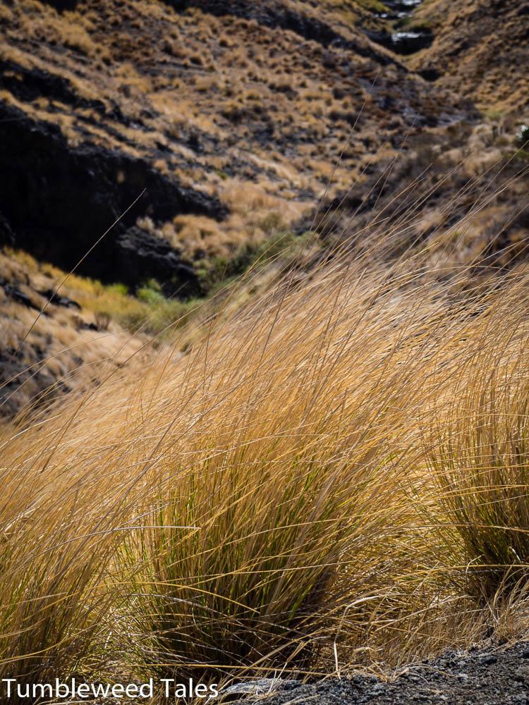 Gräser und karge Landschaft