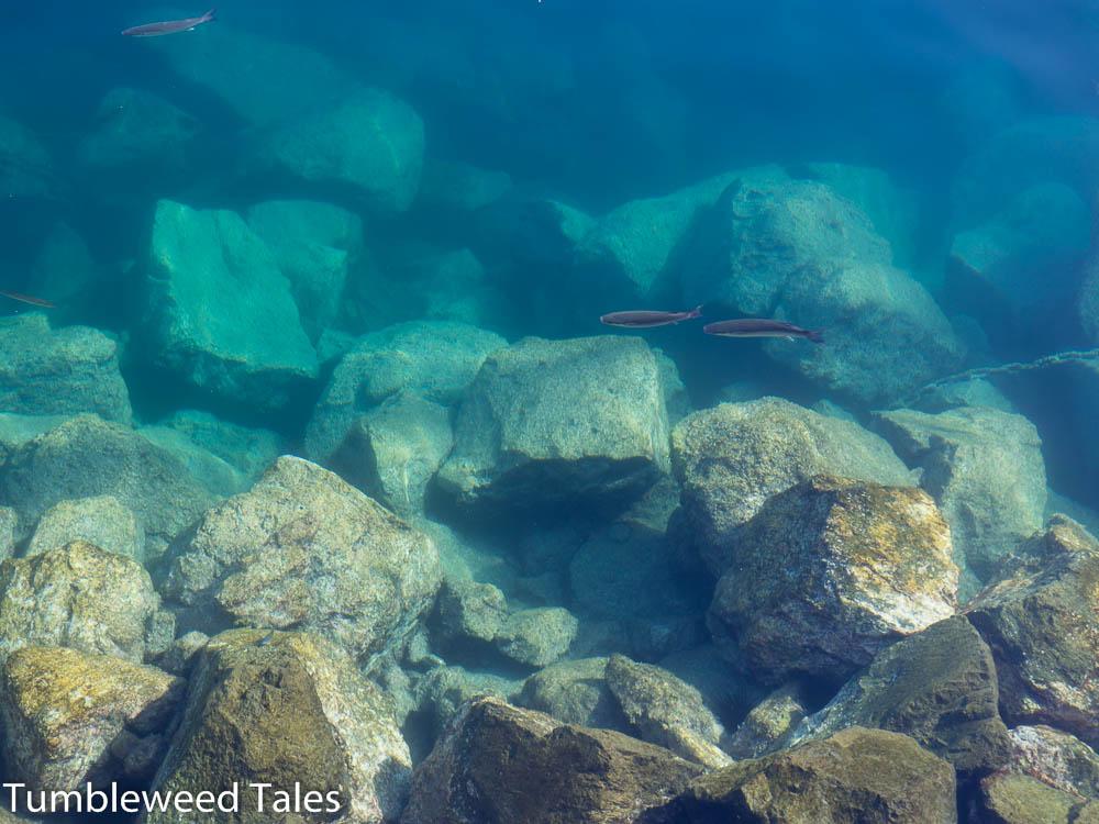 Klares Wasser im Hafenbecken