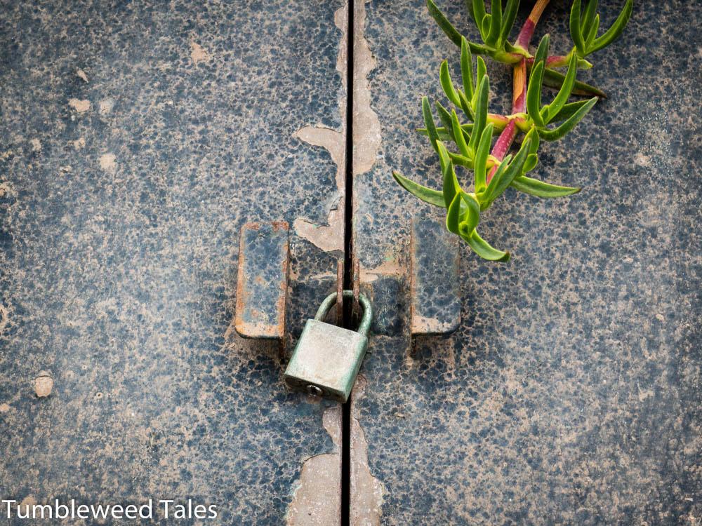 Ein verschlossener Schuppen, eingelassen in ein Pflanzenbeet