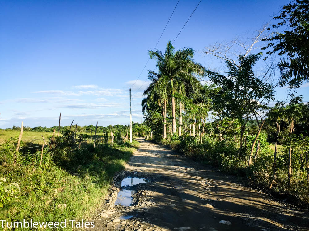 Palmen und Felder