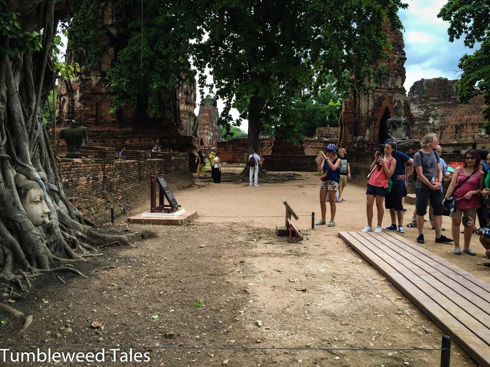Der berühmte Buddhakopf in den Baumwurzeln in der Ruine vom Wat Mahathat in Ayutthaya