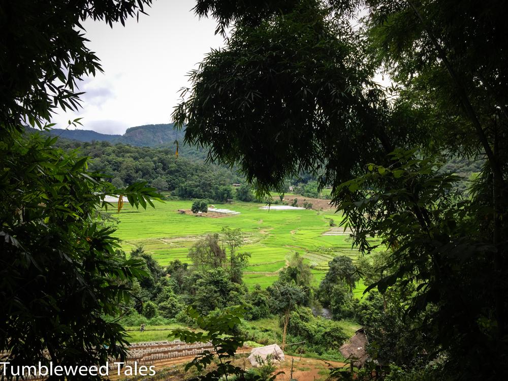Am Ende der Wanderung: Blick über die Reisplantagen der Bergvölker