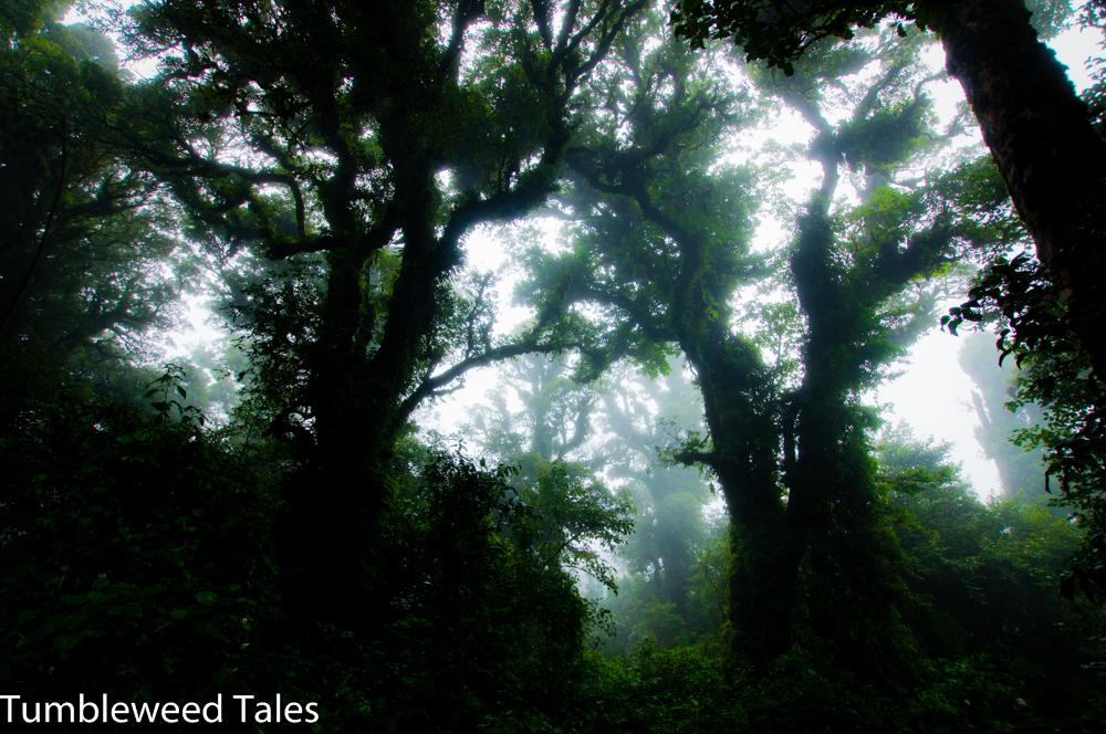 Nebel und 14° Celsius – übliche Witterungsverhältnisse auf dem Doi Inthanon!