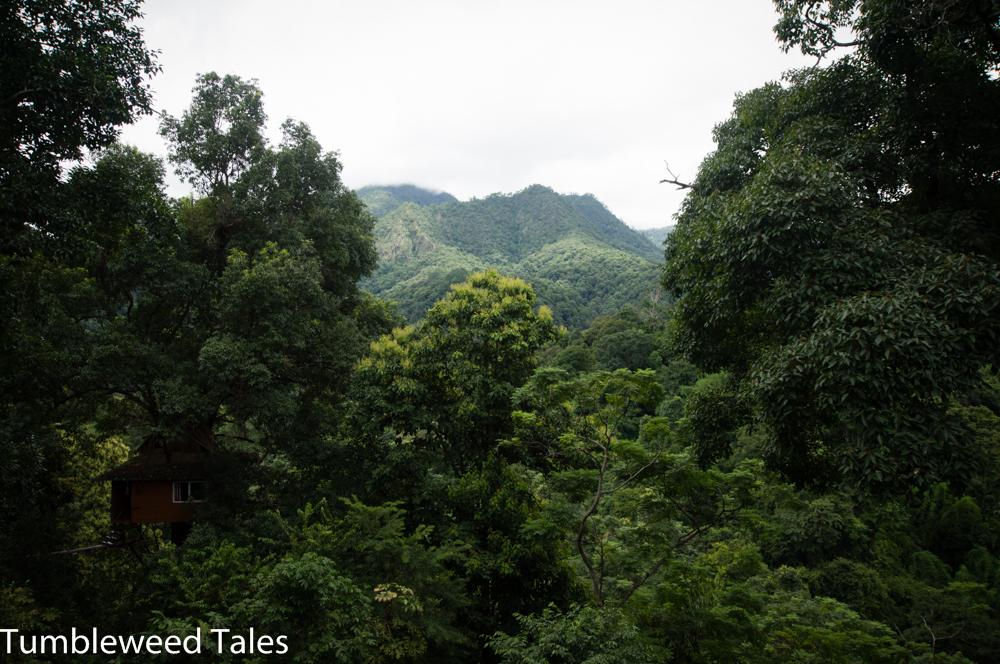 Durch diese Bergwälder sind wir geziplined!