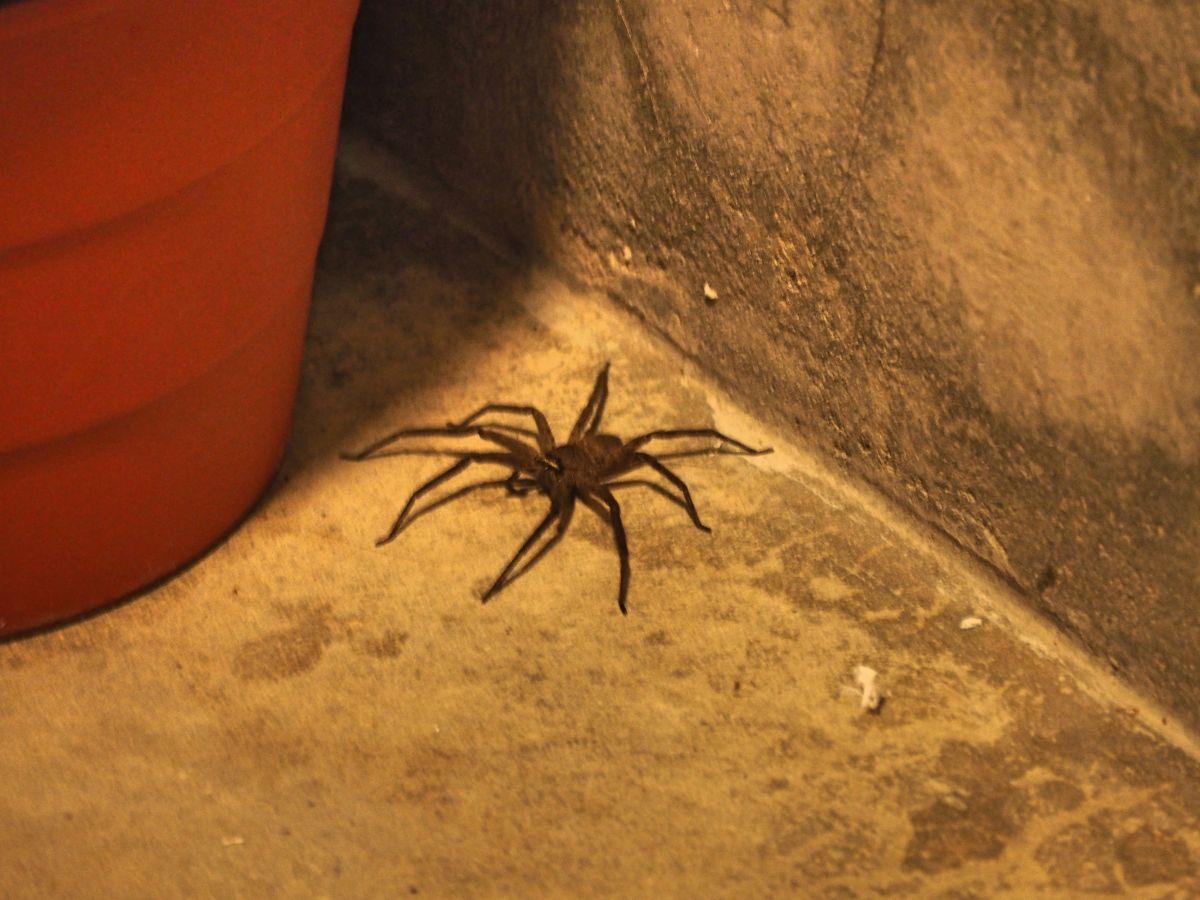 Riesige Grusel-Spinne auf der Toilette :-'(