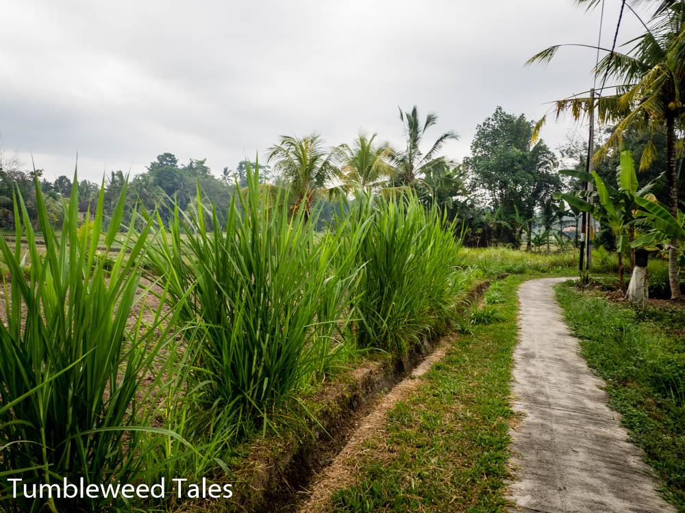Sattes Grün trotz Trockenzeit