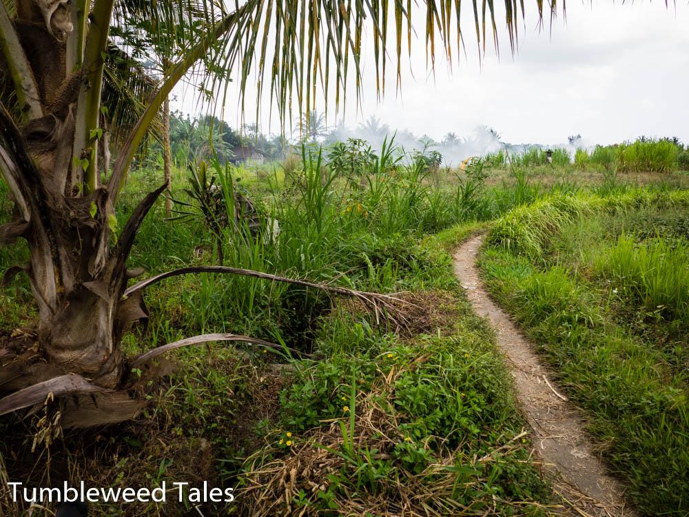 Fahrradtour durch Ubuds (Reis-)Felder